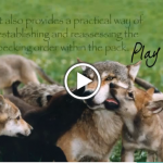 images - learning-wisdom-from-wolves